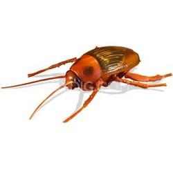 R/C Roach