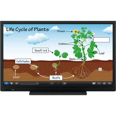 60` HD Touch 1080p Display - PN-C603D